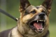 عضة كلب مسعور تؤدي بحياة طفل