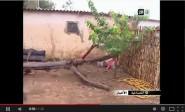 أزرو : سقوط شجرة على منزل