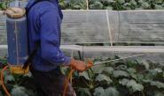 تقرير أميركي: بقايا المبيدات في الغذاء لا تدعو للقلق