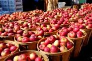تطور إنتاج التفاح بالمغرب ليبلغ 600 ألف طن
