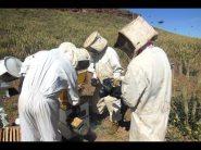 فيديو : كل ما تود معرفته عن انتاج العسل الطبيعي