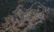 دراسة: نصف أنواع أشجار الأمازون مهددة بالانقراض