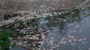 خطير…….كارثة بيئية تهدد واحة تودغى بتنغير