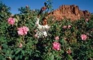 مدينة الورود قلعة مكونة ربورطاج يستحق المشاهدة