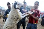 وزارة الأوقاف: عيد الأضحى في المغرب يوافق الاثنين 12 شتنبر