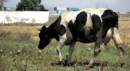 """البرلماني صدقي يطالب بإيصال دعم """"الجفاف"""" لصاحبة البقرة أو النعجة الواحدة"""
