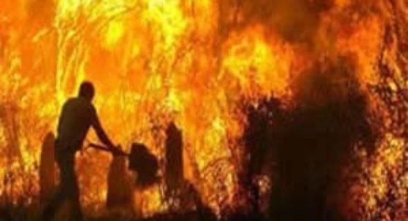 إندلاع النيران بواحات بالراشيدية مع تسجيل خسائر فادحة + فيديو